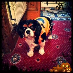 dog pumpkin halloween costume (Copy)
